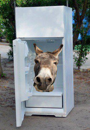 Esel im Kühlschrank - unliebsame Gedanken loswerden
