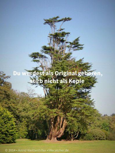 Einzigartig: Du wurdest als Original geboren, stirb nicht als Kopie • Foto by Astrid Weittenhiller