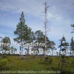 Was wir von Bäumen über Ziele und Zielerreichung lernen können