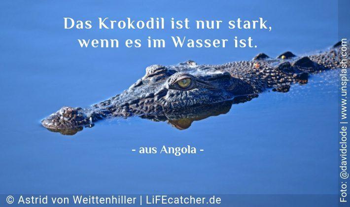 Kompetenz: Das Krokodil ist nur stark, wenn es im Wasser ist. • Design by Astrid von Weittenhiller